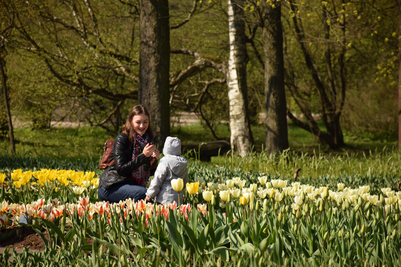 Tulpių žydėjimo savaitė